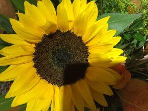 Newsletter Bild Sonnenblume